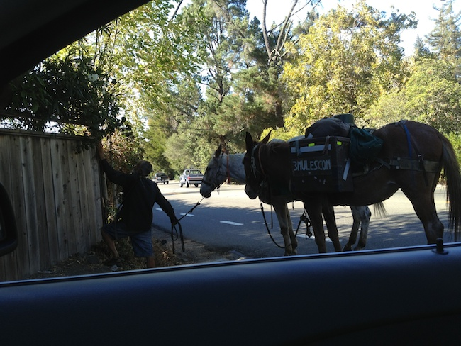John Sears, aka Mule Man, is back with his two best friends.